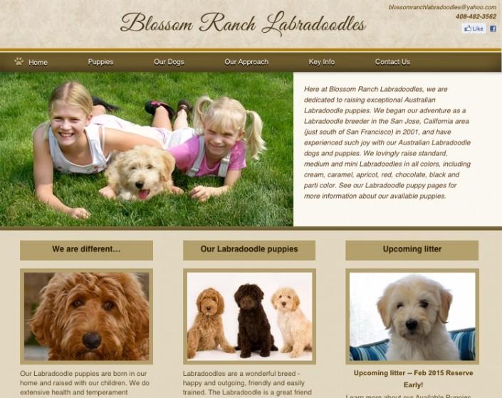 Blossom Ranch Labradoodles, Los Gatos, CA web design